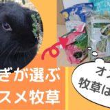 《お試しあり1,000円~》うさぎおすすめ牧草チモシー5選!好みの牧草を見つける選び方も紹介