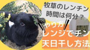 《レンチン時間》牧草チモシーをレンジで乾燥・香りを出す方法~レンジで何分?加熱時間はどれくらい?
