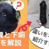 《写真でわかる》うさぎ盲腸便と下痢(軟便)の違い~要注意うんちの種類をチェックしよう!