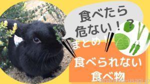 【絶対にあげてはダメ!】うさぎが食べられないもの一覧表~野菜・果物・草・花
