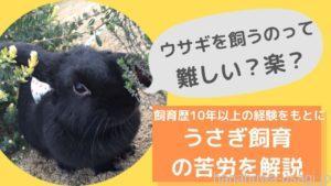 うさぎを飼うのは難しい?飼育の大変さを兎歴10年以上の経験をもとに解説