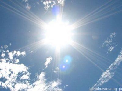 《クーラーいらない?》うさぎ夏にエアコンなしが危ない6つの理由