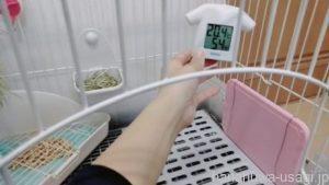 うさぎ夏の温度と湿度は?適正温度の目安はどれくらい?
