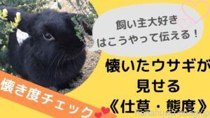 ウサギ飼い主大好き!なついたうさぎが見せる仕草や行動
