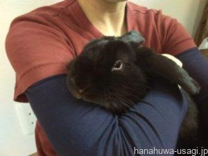 抱っこの仕方4.ウサギをしっかり抱きしめる