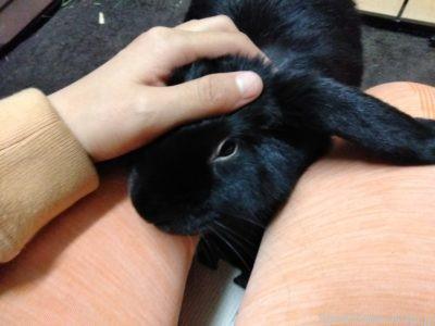 ウサギによって大好きの愛情表現は異なる