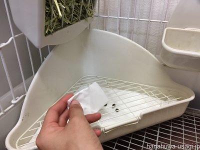 トイレでオシッコしなくなったら《基本のしつけ》を試してみる
