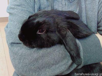 失敗原因2.ウサギが発情期や思春期で縄張りを猛アピールしている