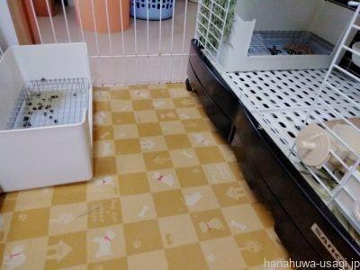 1番おすすめ!犬猫用防滑マットは齧られないし粗相掃除も楽