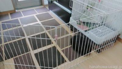 上下関係しつけ方法⑤うさぎの部屋んぽスペースを見直す