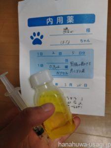 ③うさぎ避妊手術後の薬を嫌がる子が多い