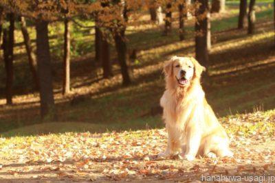 《要注意!》うさぎに犬の「服従」に近い上下関係は求めてはいけない