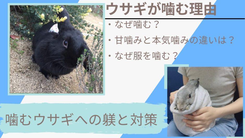 【やめて欲しい】うさぎの本気噛みと甘噛みの理由とは?噛み癖への対策としつけ方法を解説