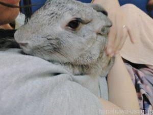 3代目うさぎ(ミニウサギ)の性格となつきやすさ