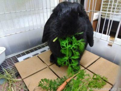 体の小さなウサギだからオヤツ選びは慎重に