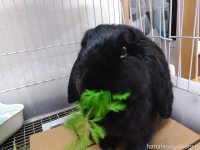 「これってウサギにあげてもいいの?」と迷った時は