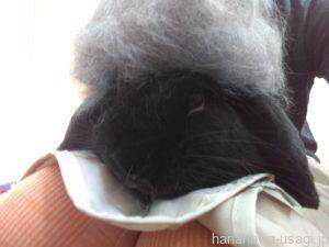 うさぎ換毛期間中に必要な換毛期対策とは?