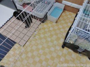 うさぎの部屋んぽ床材におすすめな「防滑消臭マット」の写真