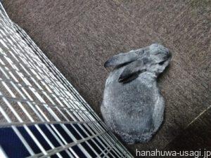 うさぎにおすすめの部屋んぽ用の床材「タイルカーペット」