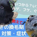 【フケ・ハゲ発見】うさぎの換毛期はいつからいつまで?換毛対策で食欲不振やぐったりを乗り越える!