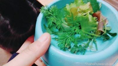 うさぎ避妊手術後の食事「野菜類」