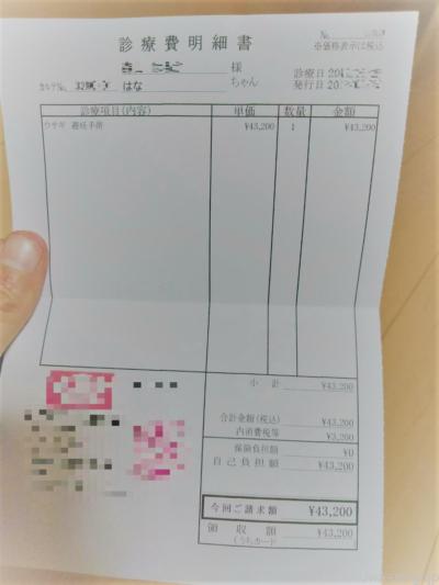 うさぎを飼うのに必要な毎月費用の目安一覧表