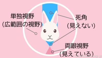 ウサギが見つめてくるけど飼い主は見えてる? 実は目が合っていない?