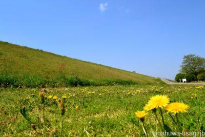 うさぎに与える野草を採取するのに適した場所