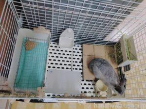 共働き時代のうさぎ飼育「朝の餌やりとトイレ掃除」