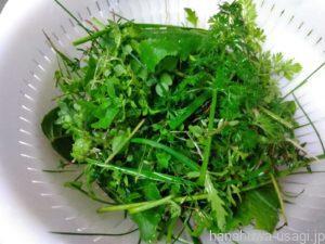 うさぎ用の野菜・野菜を組み合わせたエサ