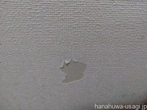 うさぎがかじった壁の修理前