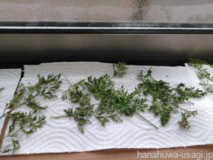 窓際放置で乾燥野菜やドライフルーツを手作りする方法