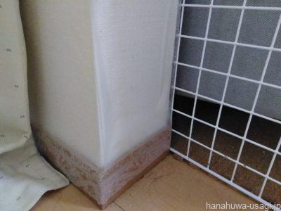 うさぎ壁かじり防止対策「壁保護シートを貼る」