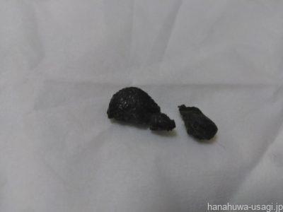 うさぎ糞の形がいびつで小さい