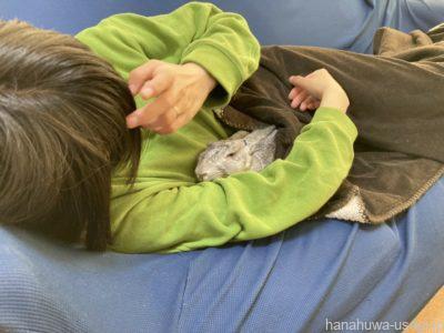 うさぎのペット保険がおすすめな飼い主とは?