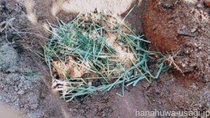 どうしてもうさぎ用トイレ砂のゴミを減らしたいなら「土に埋める」がおすすめ