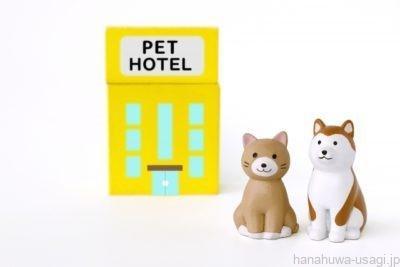 ペレットがないと動物病院・ペットホテルにうさぎを預かってもらえない