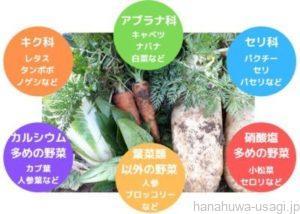 うさぎは野菜を主食にできるのか?