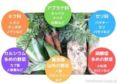 うさぎをペレットなし飼育する場合の栄養表(野菜)