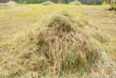 うさぎ用牧草の種類と特徴とは?
