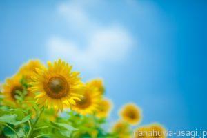 うさぎ夏の温度管理7つのチェックポイント!