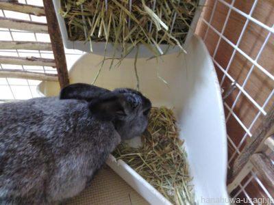 牧草をもっと食べて欲しい!牧草入れの形・位置・場所の一工夫を紹介