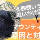 【やめさせるべき?】多頭飼いうさぎのマウンティングの原因と理由とは?2匹飼い問題行動の対処法を解説