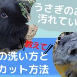 【動画】うさぎお尻の洗い方は?毛玉のカット方法は?盲腸便や尿やけ汚れの落とし方を紹介