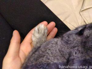 爪を伸ばしっぱなしにするとどうなる?
