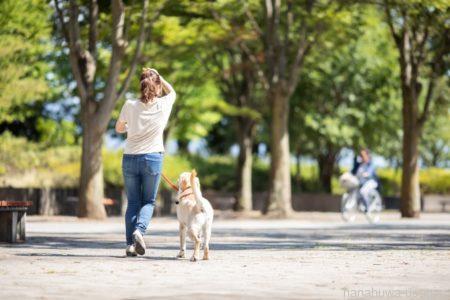 うさぎは犬や猫のように飼い主と信頼関係を築ける?
