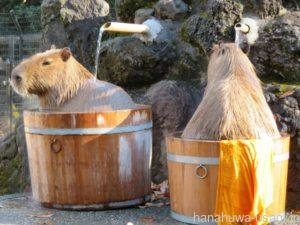お風呂好きなうさぎはいる?