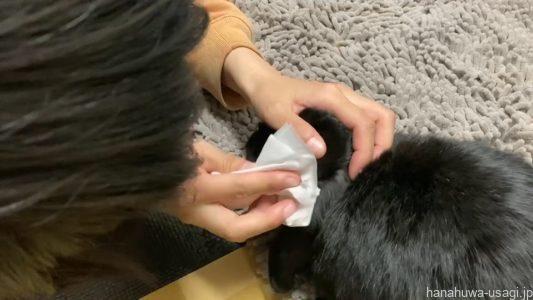目の周りの汚れと一緒に余分な点眼薬を拭き取る