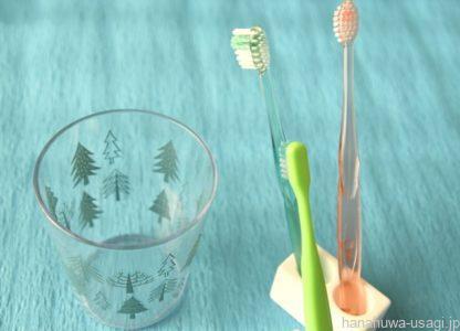 かじり木に歯磨き効果は期待できない