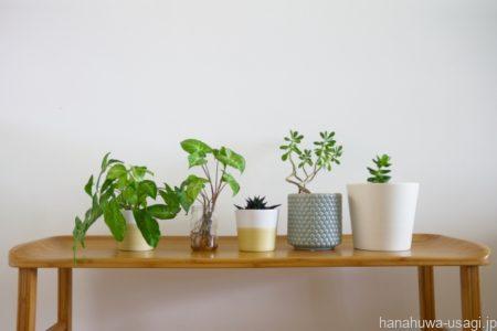 部屋んぽ中の注意点「観葉植物などの誤飲」